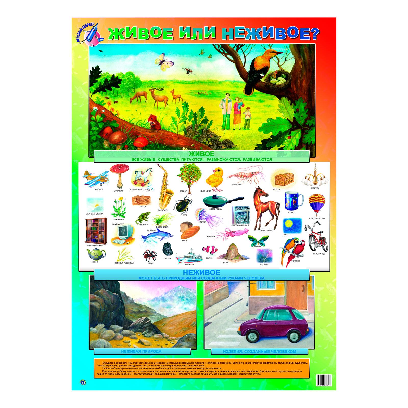 Плакат Маленький гений Живое или неживое<br>