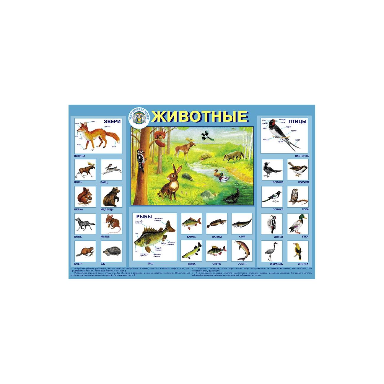 Плакат Маленький гений Животные
